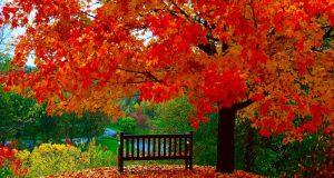 اس ام اس های زیبای عاشقانه فصل پاییز