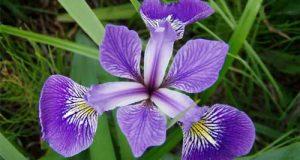 بهترین گیاهان برای تصفیه هوای منزل