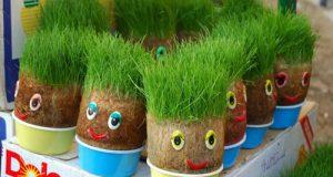 روش کاشت انواع سبزه برای عید نوروز