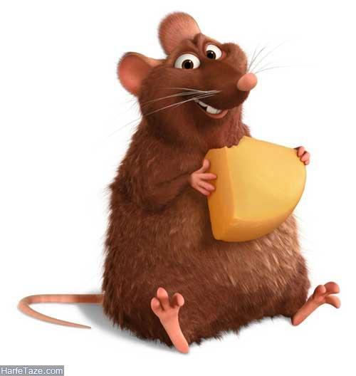 تعبیر خواب موش