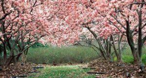متن ها و عکس های زیبا برای متولدین بهار