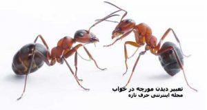 تعبیر دیدن مورچه در خواب