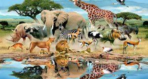 تعبیر شنیدن صدای حیوانات در خو اب
