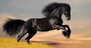 تعبیر دیدن اسب در خواب