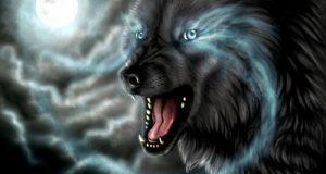 تعبیر دیدن گرگ در خواب