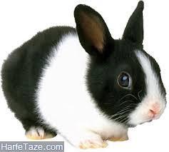 تعبیر دیدن خرگوش در خواب