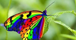 تعبیر دیدن پروانه در خواب