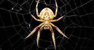 تعبیر دیدن عنکبوت در خواب