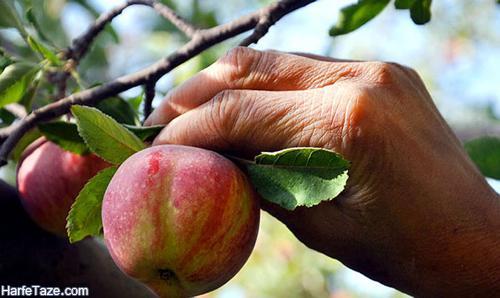 تعبیر خواب میوه چیدن