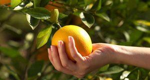 تعبیر دیدن چیدن میوه در خواب