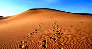 تعبیر دیدن صحرا (بیابان) در خواب