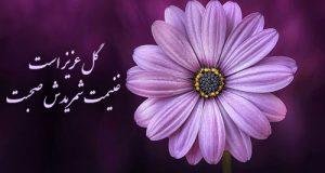 عکس پروفایل گل + عکس گل های عاشقانه برای پروفایل