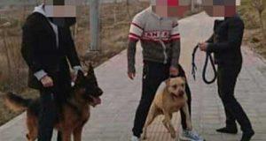 ماجرای حمله سگ به یک خانواده در لواسان + عکس