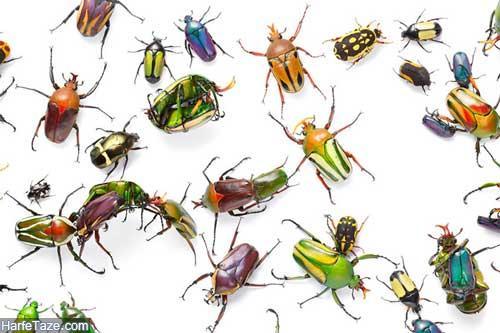 تعبیر خواب حشرات