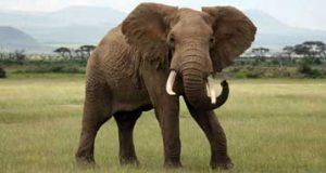 تعبیر دیدن فیل در خواب