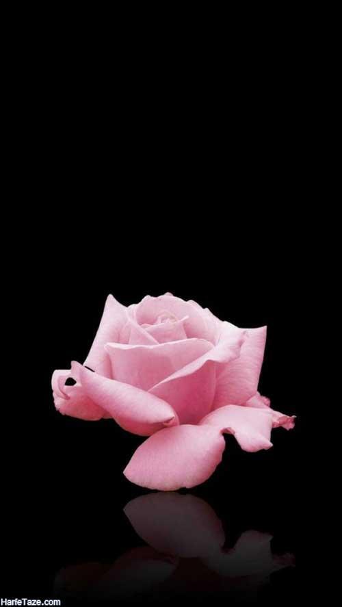 بک گراند گل