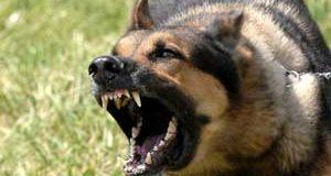 تعبیر خواب گاز گرفتن سگ چیست؟