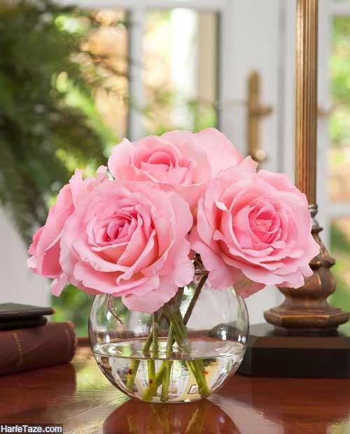 عکس گل رز
