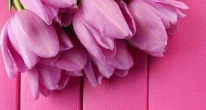مجموعه جدید والپیپر گوشی با عکس گل + متن قشنگ