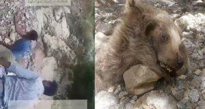 عکس و فیلم کشتن توله خرس سوادکوه + بازداشت متهمان