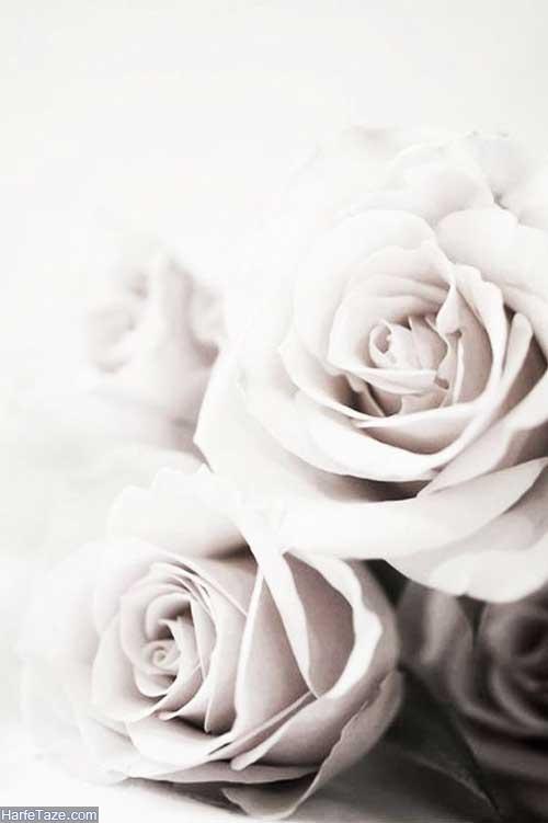 استوری گل