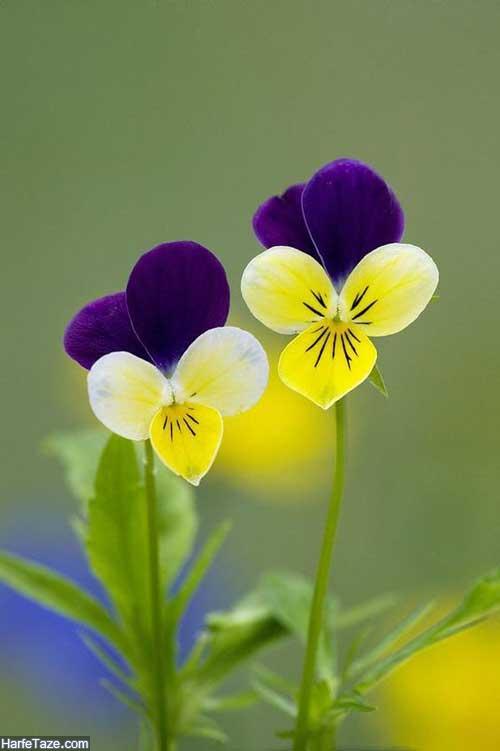 استوری گل زیبا