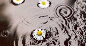 عکس استوری باران برای اینستاگرام | عکس بارش باران و روز بارانی