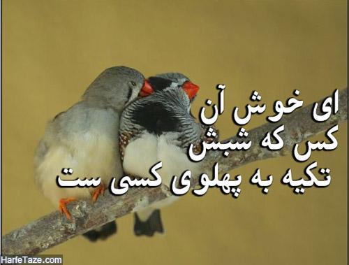 عکس عاشقانه پرنده ها