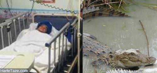 حمله تمساح