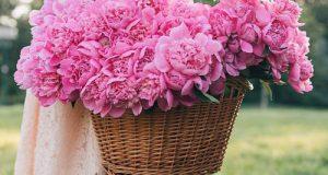 عکس استوری روز دختر اینستاگرام + متن تبریک روز دختر سال ۹۸