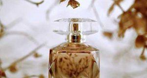قوانین خرید عطر مناسب پاییز و زمستان | عطر زنانه و مردانه فصل سرد