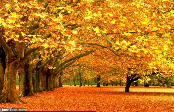 انشا پاییز با مقدمه و نتیجه