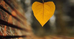 زیباترین و رویایی ترین پس زمینه پاییزی برای موبایل با کیفیت بالا