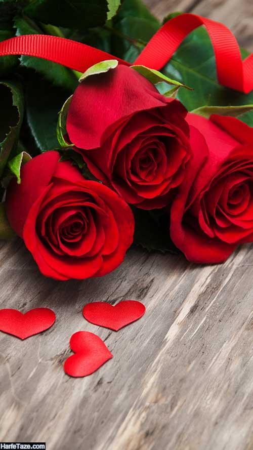 استوری گل رز