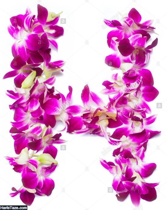 عکس پروفایل حرف h داخل گل