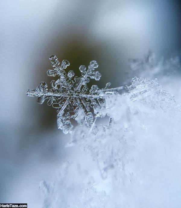والیپر دونه های برف برای بک گراند زمستانی موبایل پسرانه