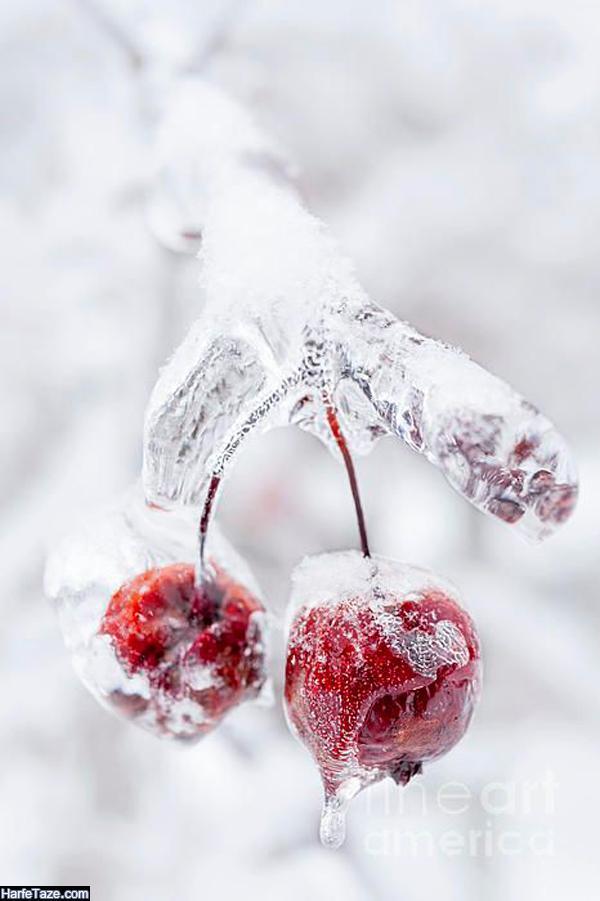 بک گراند زمستانی با تم صورتی برای گوشی دخترانه