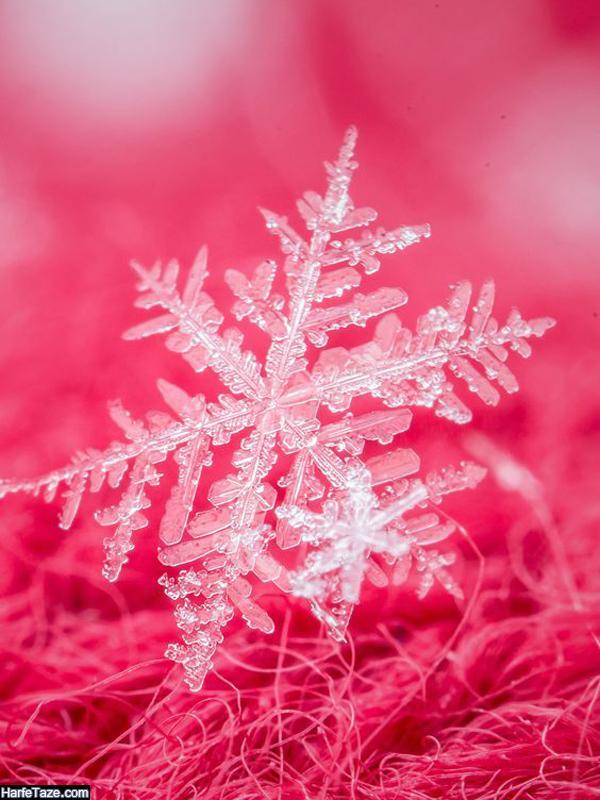 تصاویر دونه برف برای بک گراند زمستانی
