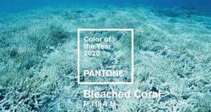 رنگ سال ۲۰۲۰   رنگ مد سال ۹۹ چیست؟