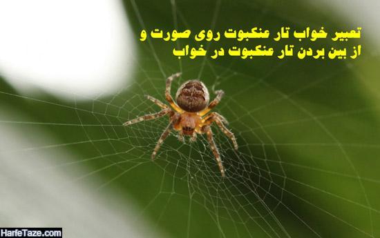 تعبیر خواب تار عنکبوت روی صورت