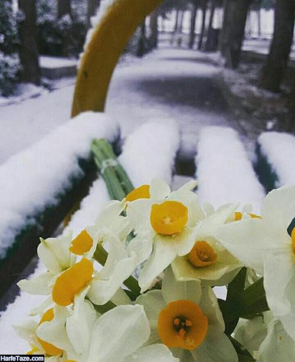تبریک تولد متولدین زمستان