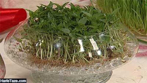 کاشت سبزه داخل تنگ ماهی و در آب با انواع دانه ها + آموزش تصویری