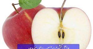 مراحل کاشت هسته سیب برای سبزه عید به صورت مرحله به مرحله