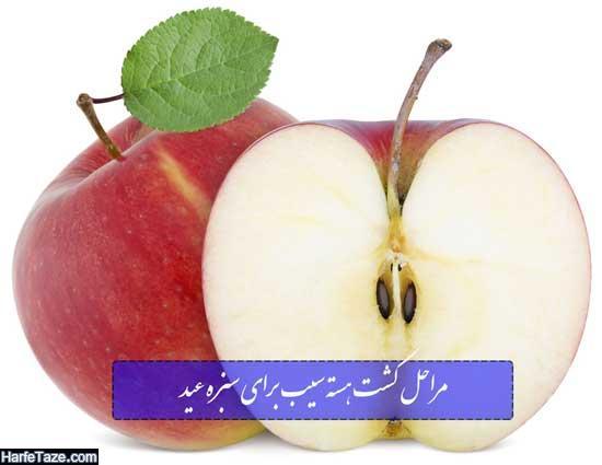 مراحل کشت هسته سیب