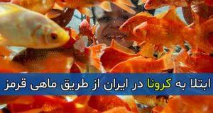 ابتلا به کرونا در ایران از طریق ماهی قرمز