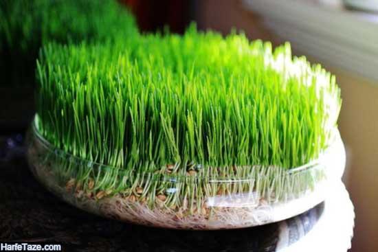 مدل سبزه عید نوروز جدید