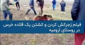 عکس و فیلم زجرکش کردن و کشتن خرس در اطراف روستای ملونه ارومیه