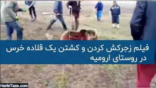 عکس و فیلم زجرکش کردن و کشتن یک قلاده خرس در ملونه ارومیه