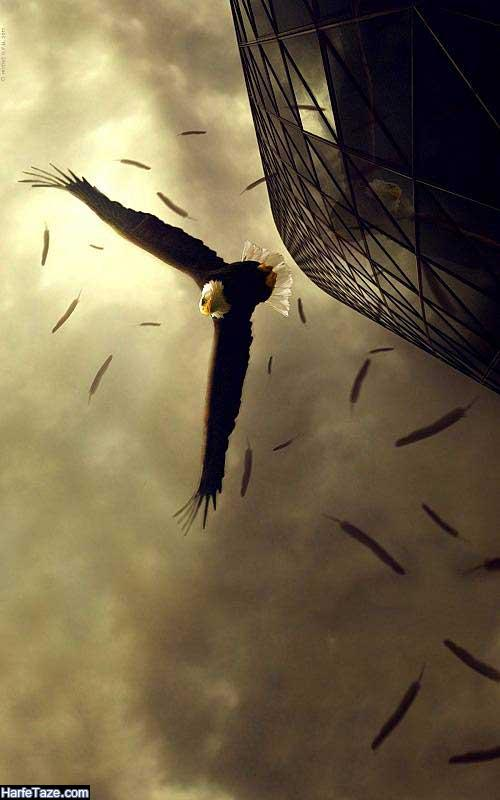 تصاویر عقابهای در حال پرواز برای بک گراند گوشی