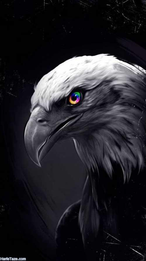 تصاویر عقابهای سر سفید برای خالکوبی